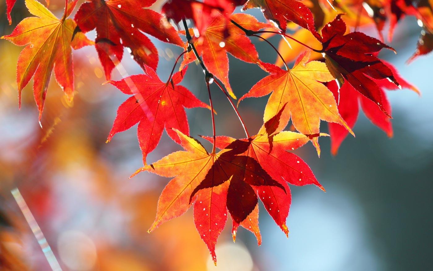 cena-autunno-castello-frassinello